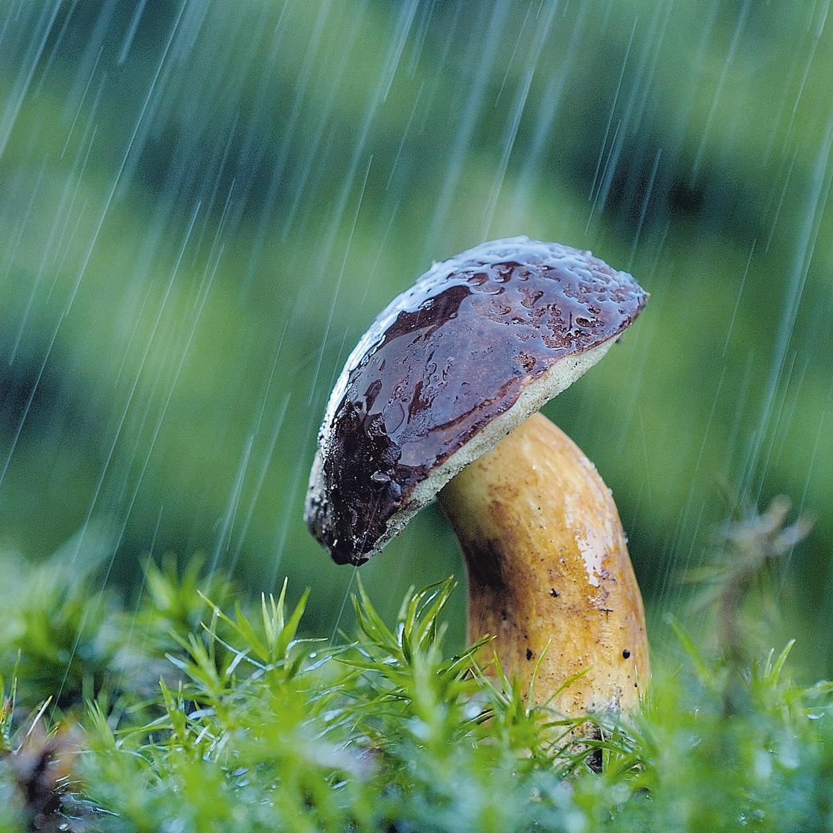 гриб под дождем картинки когда можно будет